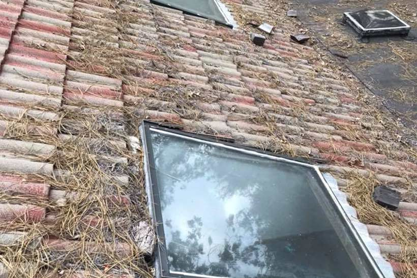 needles on the roof - roof damage caused by trees