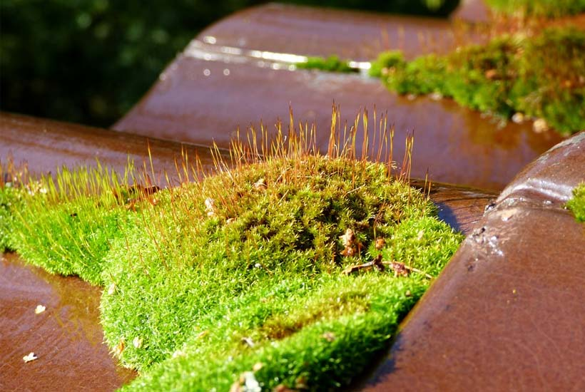 is moss on the roof a problem?