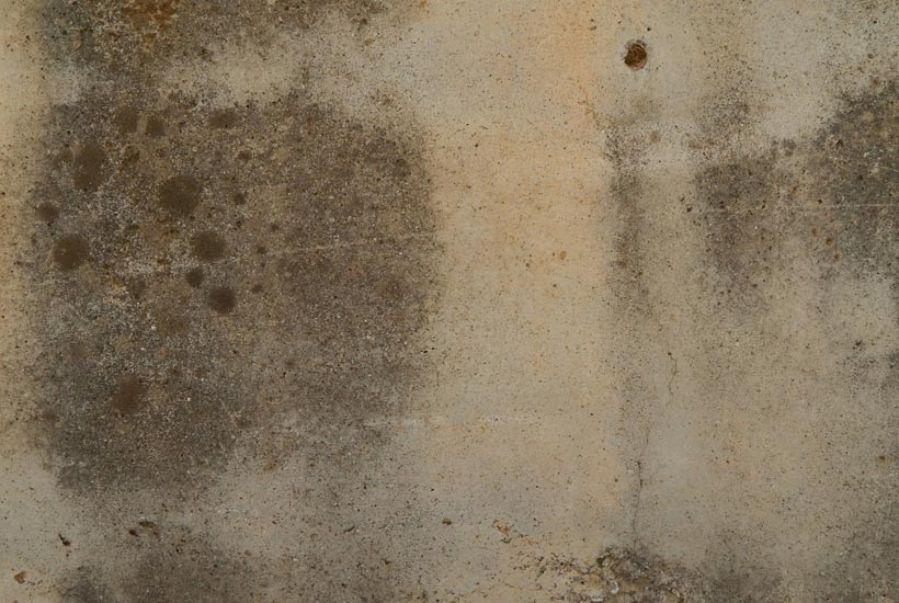 how to remove ceiling mold after a roof leak